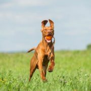 Major Dog Speed Sling Ball lifestyle1