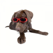 Doggles Shiny Red with dog