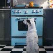 PLAY American Classic Dog looking at hamburger on stove2