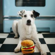 PLAY American Classic Dog with Hamburger2