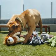PLAY Safari dog with Lion2