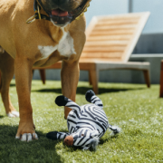 PLAY Safari dog with Zebra3
