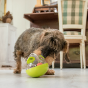 PLAY wobble ball with dog 62
