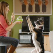 PLAY wobble ball with dog2