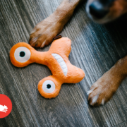 Play Momos Monsters Orange with Dog2