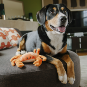 Play Under the sea Crab with dog2