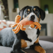 Play Under the sea crab with dog3
