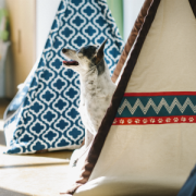 Tee Pee with Dog 62