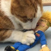 Donald cat toy with cat 2