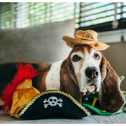 PLAY Mad Hatter Hats with Dog2