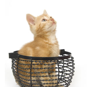 Giftware for Cat Lovers