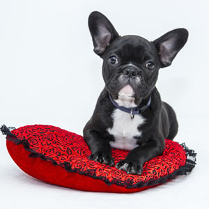 Giftware for Dog Lovers