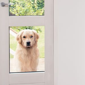 House/Home for Dog Lovers